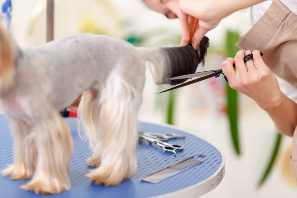 Mobile pet grooming Miami springs