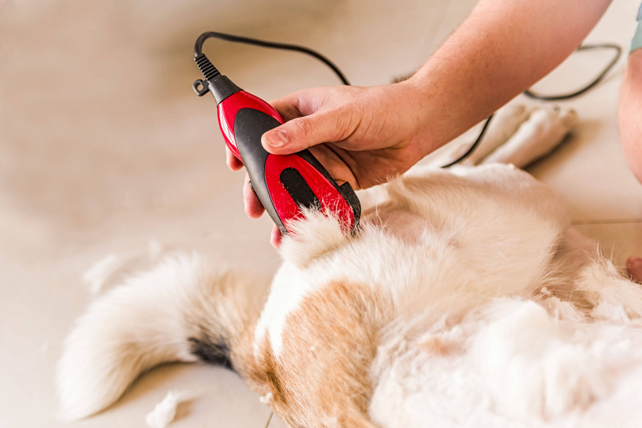 Know some importance of pet grooming